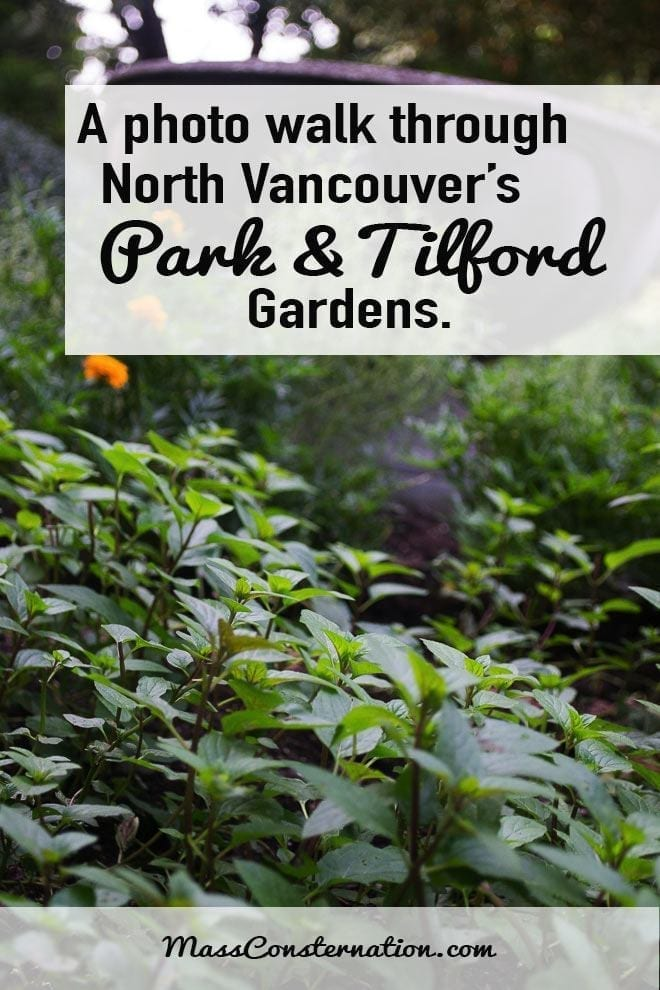 A Photo Walk Through North Vancouver's Park and Tilford Gardens
